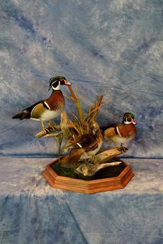 Wood Ducks by Aaron Reiling