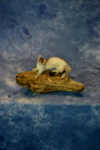 Weasel by Travis Sandberg