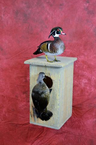 Commercial Wood Duck Drake by Aaron Reiling