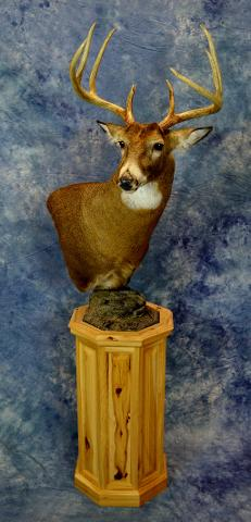 Whitetail Deer by Ken Shane
