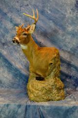 Whitetail Deer pedestal by Matt Jensen
