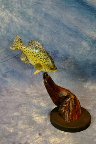 Arts & Crafts - Crappie Wood Carving by Marty Wiley