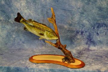 Large mouth Bass by Leland Ledford
