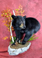 Black Bear by Nick Generux