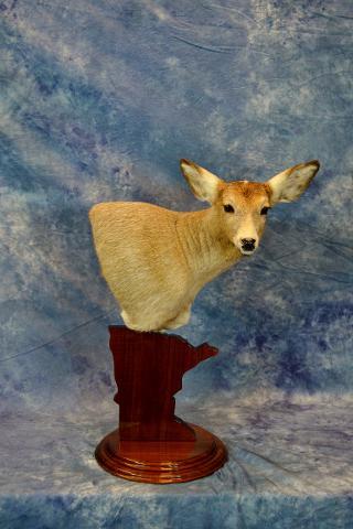 Whitetail doe by Nick Generux