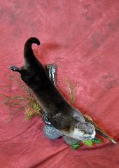 otter by brad graber