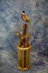 Pheasant by Erik Becker