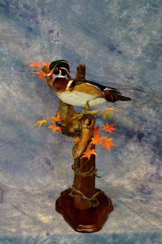 Wood Duck by Brad Graber