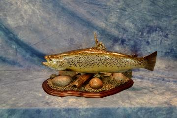 Commercial Division Brown Trout by Brad Graber