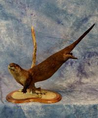 Otter by Mark Becker