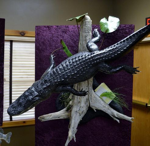 Commercial Division - Alligator by Garrett Sunram