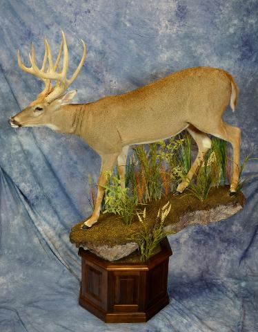 Commercial Division Life Size Whitetail by Garrett Sunram