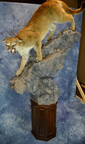 Commercial Division Mt Lion by Garrett Sunram