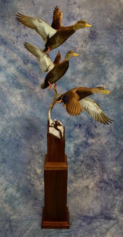 Judges Choice Best of Show - Black Ducks by Mike Nakielski
