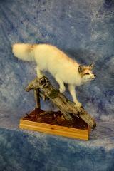 Arctic Marble Fox by Ashley Friendshuh