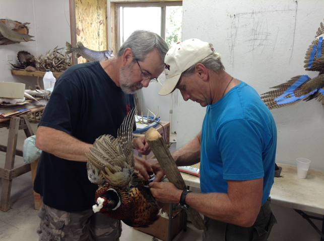 Scott Vohnoutka and Ken Shane working together on a ringnecked pheasant