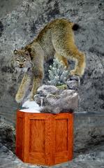 Mark Mayer professional lynx