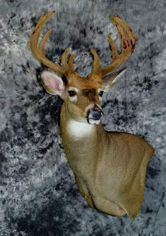 Mark Mayer whitetail