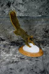 Mark Mayer squirrel