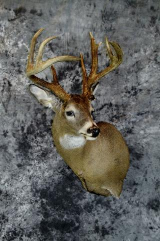 Sam Nestrud Commercial whitetail
