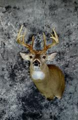 Brian Gebeke commercial whitetail