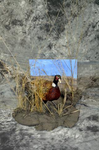 Jon Peterson pheasant novice