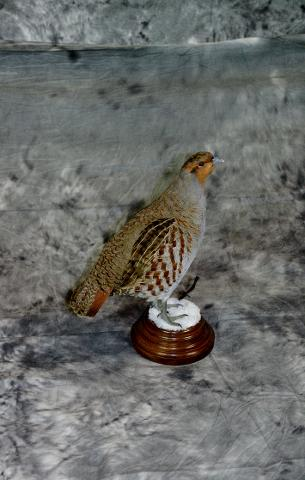 Aaron Reiling grey partridge professional