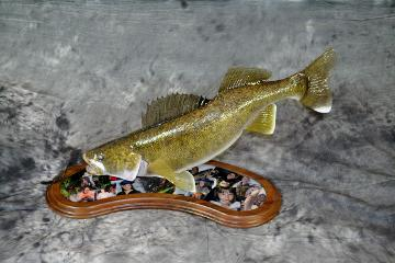 Matt Jensen, Walleye Professional