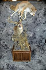 "Thomas Hansen, mule deer Masters ALS Awareness Award ""Jason Hatz"" winner"