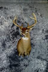 Eric Gensmer, whitetail novice