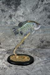 Marty Wiley, Crappie masters reproduction