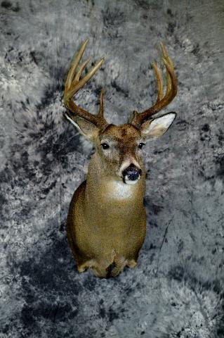 Marty Wiley, Whitetail Professional