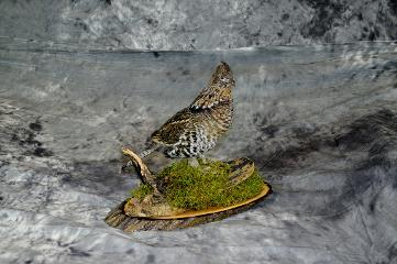 Marty Wiley, ruffed grouse masters