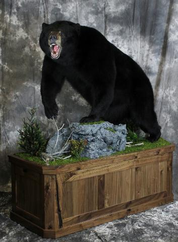 Nick Genereux, Black Bear masters