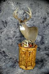 Bruce Norton,  whitetail professional