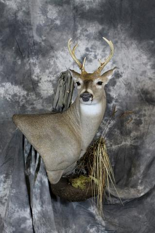 Nick Genereux whitetail professional