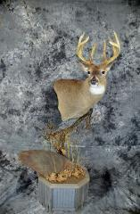 Kyle Lakey, whitetail masters