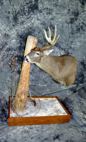 Micheal Kutina, Whitetail Professional