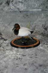Jeff Baker, Canvasback masters