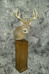 Whitetail Deer - Mark Mayer