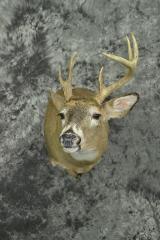 Whitetail Deer - Riley Jordahl