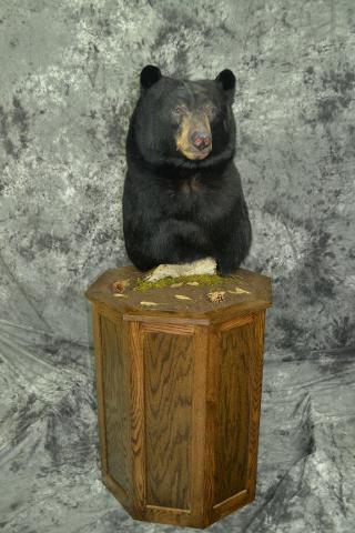 Black Bear - Mark Mayer