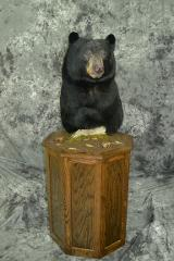 Black Bear - Mark Mayer