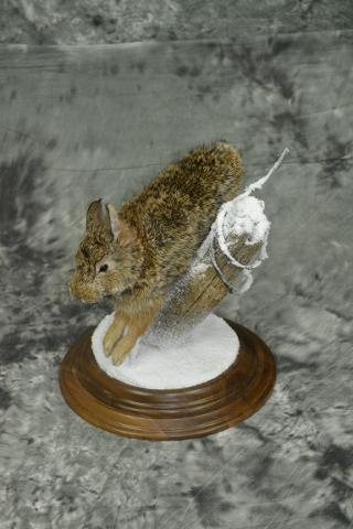 Cottontail Rabbit - Mark Mayer