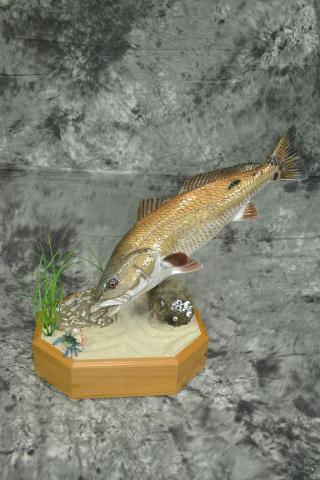 Red Fish - Steve Johnson