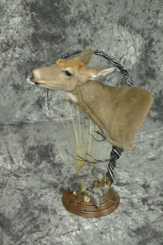 Whitetail Deer - Garrett Sunram