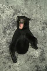Black Bear - Curt Markgraf