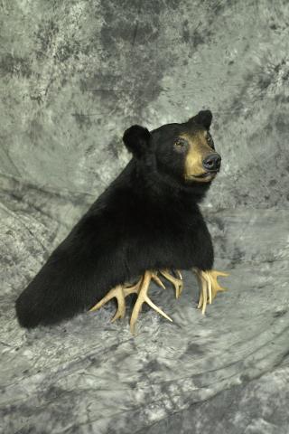Black Bear - John Duberowski