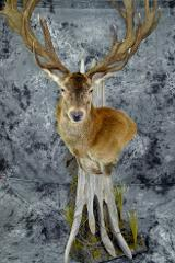 Red Stag - Rob Westby