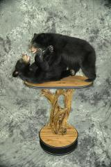 Black Bears - David Schmidt